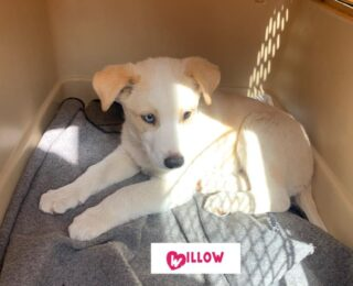 Willow ADOPTED