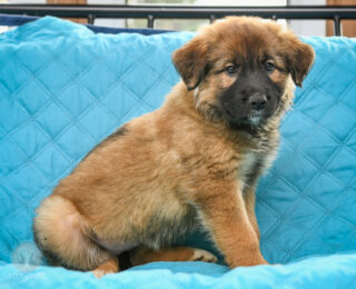 Myla (adoption pending)